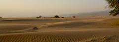 DUNAS. (NIKONIANO) Tags: dune dunes dunas desierto torreón dunasdebilbao torreóncoahuila