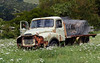 Out to  pasture. (Bernard Spragg) Tags: decay rust truck old rustic outtopasture