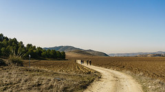 VALLE DEL JARAMA (bacasr) Tags: path hicking colinas walking hills senderismo valle spain campos way caminando trail fields madrid camino españa argandadelrey valley