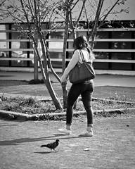 Nos chemins contraires (CaroDiario) Tags: photographiederue streetphotography passante passer woman pigeon scènederue streetscene marche walk print printemps spring noiretblanc blackandwhite panasonicdcgh5 leicadgnocticron425mmf12