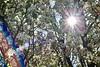 Illumination II (starborn-alchemy) Tags: lensflare flare light rainbow blossoms spring nature flagstaff arizona flickrfriday sun sunlight sunshine floral