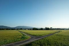 田 (fumi*23) Tags: ilce7rm3 sony samyang 12mm apsccrop field agriculture miyazaki morning japan ricefield a7r3 emount samyang12mmf20ncscs path road 田 宮崎 道 サムヤン 朝