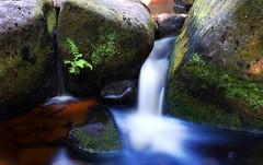 Fern Waterfall (Rob McC) Tags: waterfall water stream le longexposure moss fern movement milky rocks
