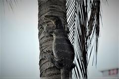 THL0328 (deandenby86) Tags: thailand phuket au nang ladyboys elephant lizard krabi karon bangkok