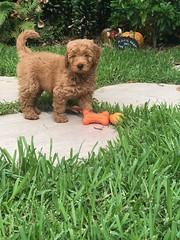 Ginger's adorable little girl!