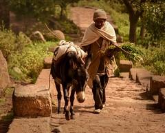 Tigray Farmer (Rod Waddington) Tags: africa african afrique afrika äthiopien ethiopia ethiopian ethnic etiopia ethnicity ethiopie etiopian culture cultural farmer donkey steps rock stone man trees
