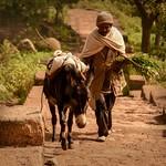 Tigray Farmer thumbnail