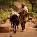 Tigray Farmer