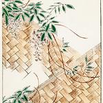 Wisteria illustration from Bijutsu Sekai (1893-1896) by Watanabe Seitei, a prominent Kacho-ga artist. Digitally enhanced from our own original edition. thumbnail