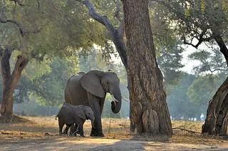 Zimbabwe, forest walk