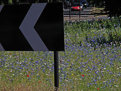 Wild Flowers:    184/365 (amandabhslater) Tags: 2018aphotographicdiary allesley roundabout traffic island wildflowers cornflowers poppies chevron sign road