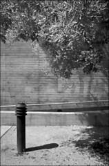 schwarzweiss relativiert grünzeug vor beton (fluffisch) Tags: fluffisch darmstadt leica leicam6 summiluxm35f14 preasph summilux 35mm f14 rangefinder messsucher analog film cms20 staatstheater adox