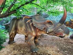 Un Styracosaurus Au Dinozoo Du Zoo Granby. 2018 06 30 17:39.57 (Sandbanks Pro) Tags: granby quebec canada zoogranby zoo dinozoo styracosaurus dinosaure crétacé jurassic prehistoric animal nature touristique paysage ville city été summer végétation