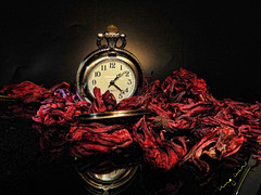"Time doesn't go back (ingcuevas) Tags: time watch hour concept conceptual flower jamaica tiny small pretty romance love tender beautiful warmth warm red vibrant black colors colorful bright ""nikonflickraward"" soe"
