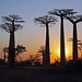 Sunset with Baobabs