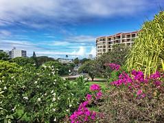 Chaminade University (jcc55883) Tags: chaminade chaminadeuniversity kaimuki palolovalley waialaeavenue sky clouds flora honolulu hawaii oahu ipad
