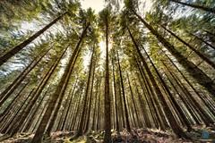 Fernworthy Forest - Dartmoor (pm69photography.uk) Tags: fernworthy fernworthyreservoir fernworthyforest trees tree southwest sony spooky sonya7r3 sonya7riii ilovedevon ilce7rm3 voigtlanderheliarf56 voigtlander voigtlanderheliar10mmf56 devon dartmoor moody aurorahdr2018 atmospheric atmosphere a7r3 a7riii ultrawide wideangle