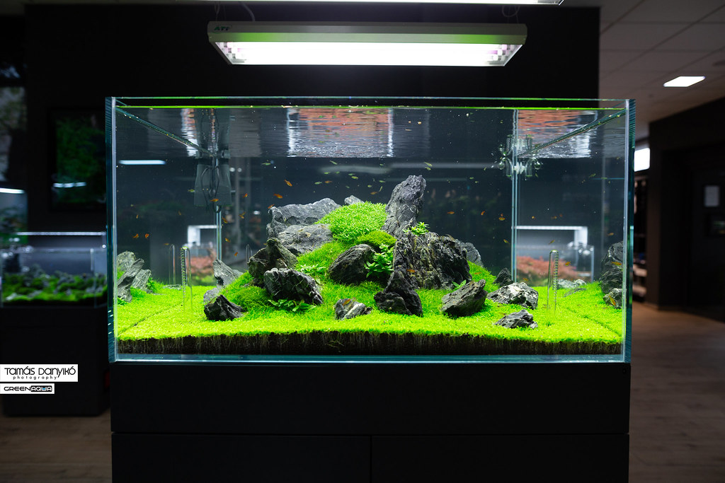 the world s most recently posted photos of aquarium and planted