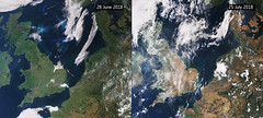 From green to brown in a month (europeanspaceagency) Tags: esa europeanspaceagency space universe cosmos spacescience science spacetechnology tech technology earthfromspace observingtheearth earthobservation satelliteimage copernicus sentinel europe drought uk england scotland ireland wales summer belgium thenetherlands denmark germany heatwave sentinel3
