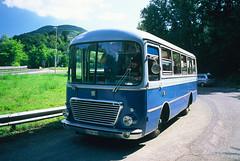 Terza fermata fotografica (maximilian91) Tags: fiat314cansa fiat314 fiatcansa fiat oldbuses vintagebuses italianbuses italia italy liguria laspezia provia provia100 35mm film analogue nikonfe
