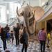 Museu de História Natural de Helsinque