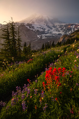 Smoky Mountain (mhitchner1) Tags: nature landscape mountain wildflowers flowers summer rainier northwest washington usa trail hike sunset
