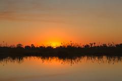 Sunset on the Delta (mclcbooks) Tags: sunset evening dusk sundown river reflections water moremiwildlifereserve moremicrossing okavangodelta botswana africa landscape safari mosquitos