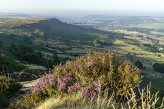 Heather (l4ts) Tags: landscape derbyshire peakdistrict darkpeak derwentvalley curbaredge baslowedge gritstone gritstoneedge heather moorland easternmoorspartnership