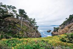 Lobos State park (Gary P Kurns Photography) Tags: onone pointlobos nikon nikond850 california