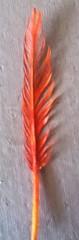 Phoenix Feather (al-worthy) Tags: phoenix fire bird feather paints acrylic flame