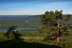 DSC_5320 Oslo (Charli 49) Tags: nature naturfotografie landschaft landscape norwegen oslo holmenkollen