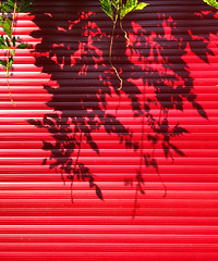 on holidays (Rosmarie Voegtli) Tags: vacation holidays closed blinds plants shadows lines horizontal red rotrougerossorood repetition