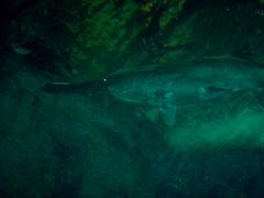 Aquarium / Fish (Adventurer Dustin Holmes) Tags: 2005 wondersofwildlife springfield indoor springfieldmo missouri greenecounty ozarks fish aquarium underwater animal animals water