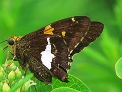IMG_7167 (kennethkonica) Tags: nature birds animalplanet animal animaleyes autumn canonpowershot canon usa america midwest indianapolis indiana indy color outdoor wildlife