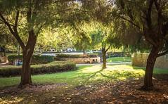 Peaceful Saturday stroll in East Perth (Corin Garnett-Law) Tags: garden green grass trees perth westernaustralia eastperth