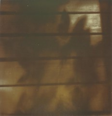 Leaves of shadow. One (...The Man From The Past...) Tags: impossiblei1 px600 polaroid theimpossibleproject analog film polaroidweek
