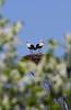 IMG_7165 (Christandl) Tags: storch störche hohenau nö stork austria