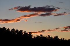 Evening Orange 175/365 (stevenp2269) Tags: d7200 orange nikon evening sunset