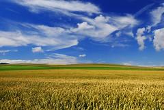 Cape One (Vainsang) Tags: capblancnez cap cape champ field sky ciel cotedopale escalles