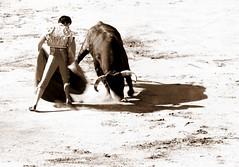 Ceret 2017 - Los Miuras (aficion2012) Tags: ceret france francia catalogne catalunya corrida bull fight bullfight toros toro taureau taureaux tauromquia tauromachie paulita miura 2017 monochrome sepia amarguita torero toreador matador