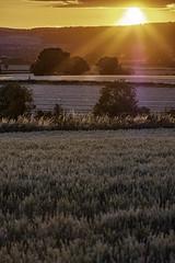 Carlow Sunset (jim2302) Tags: sun sunset light beams wheat oats farm crops rays fuji fujifilm 50230mm lightroom not hdr landscape