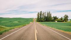 Drive (Pedalhead'71) Tags: drive easternwashington landscape palouse pandora road rural washington whitmancounty