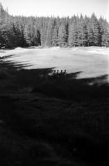 quatre qui sortent de l'ombre (asketoner) Tags: shadow four people silhouettes forest daylight
