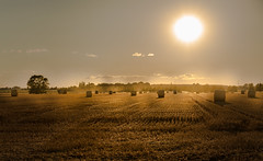 July (--Conrad-N--) Tags: sunset sony summer harvest flickr field grass golden shadow time haybales
