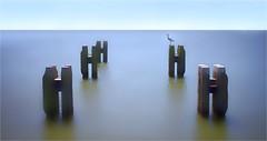 HOORN (bert • bakker) Tags: hoorn noordholland thenetherlands nederland havenvanhoorn harborofhoorn sea zee dolphin mooringpost dukdalf slauerhoff northholland