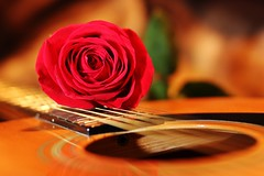 09 06 2017 Z1z Soul Music (srypstra) Tags: guitar rose stilllife sherirypstra
