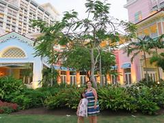 IMG_4735 (Man O' World) Tags: baha mar nassau bahamas beach turtle resort