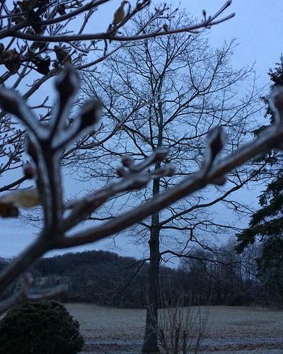 Ice everywhere... #freezingrain #ice #branches #April #amityfarmbatik