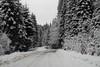 route-frontière enneigée (8pl) Tags: arbres route neige hiver balkans