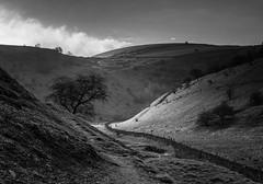 Cressbrook Dale (l4ts) Tags: landscape derbyshire peakdistrict whitepeak limestone blackwhite monochrome cressbrookdale cressbrookdalenationalnaturereserve wardlow wardlowhaycop drystonewall